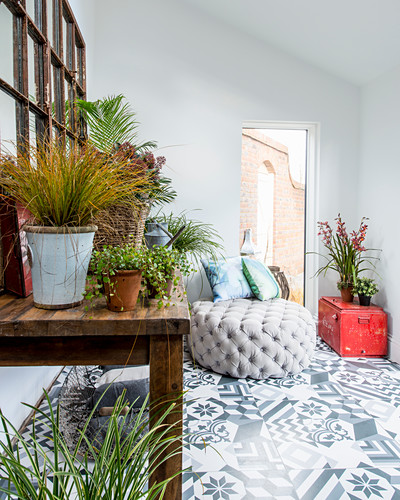 Many houseplants in connecting room with patterned floor