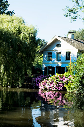 House on river, tree and pink flowers