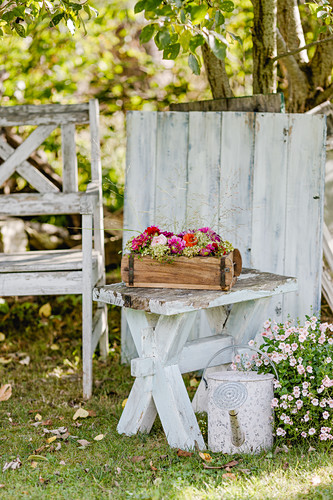 Arrangement of dahlias in wooden box on garden table next to watering can and flowering twinspur