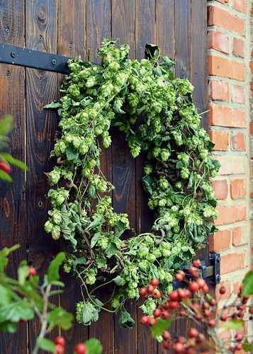 Hop Wreath At The Barn Door