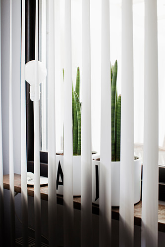 House plants in pots decorated with black letters behind louvre curtain