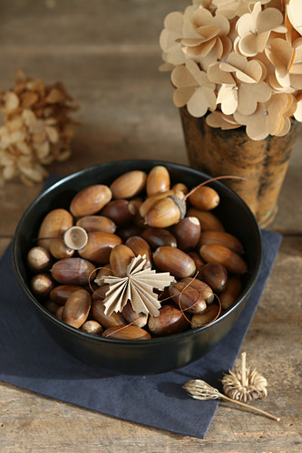 Bowl of acorns in front of paper hyydrangea