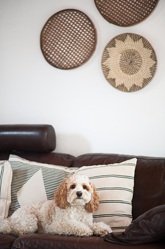 Dog on brown leather sofa with scatter cushions