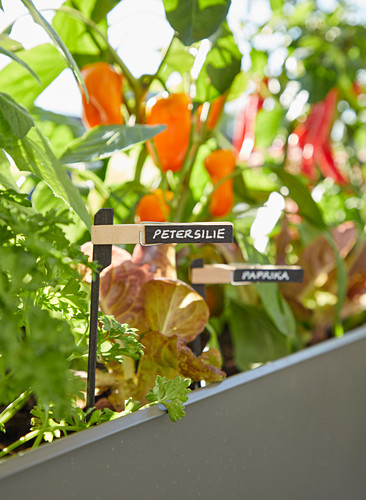 DIY plant labels in planter