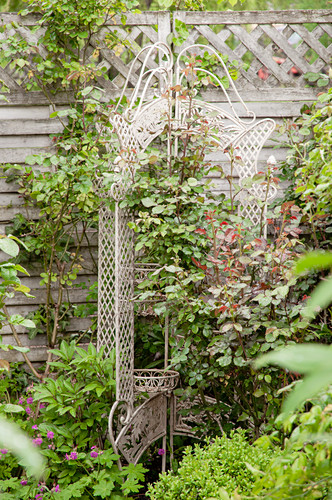 Roses growing over antique plant stand in front of screen fence