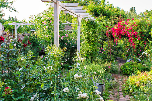 Zinc watering can, rose arch and pergola in garden