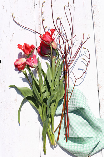 Parrot tulips and dogwood branches on white boards