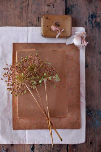 Dried garlic flowers and garlic cloves on top of cardboard box