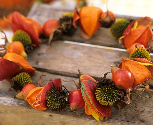 Wreath of Chinese lanterns (Physalis)& Rudbeckia seed heads