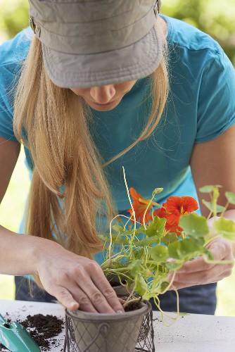 A woman planting a nasturtium in a pot