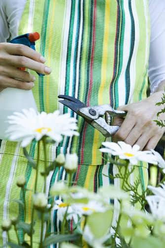 A woman with garden shears and a spray bottle with marguerites