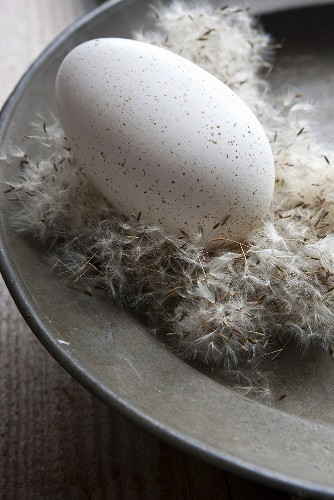 A duck egg on dandelion seeds on an old plate