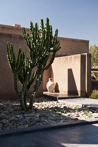 Cactus in a front garden of a minimalistic, newly built house in Morocco