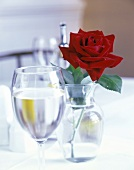 Rose and Vase