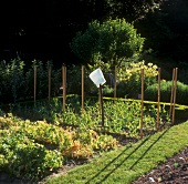 View into a vegetable garden, chef's hat on hay fork