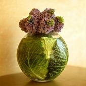Hyacinths with cabbage leaves in a round vase