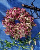 Wreath of herbs with yarrow