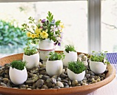 Easter decoration: egg shells filled with herbs and flowers