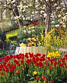 View into garden with beds of tulips & table laid for coffee