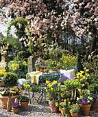 Garten mit Frühlingsblumen, Kaffeetisch etc.