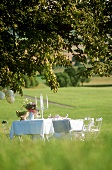 Table laid in white in meadow under chestnut tree