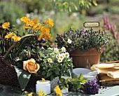 Still life with herbs, flowers, marigold cream