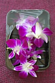 Purple orchids in a plastic tray with plastic wrap