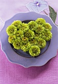 Chrysanthemums arranged in shape of heart on plate