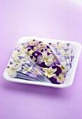 Purple pansies in plastic container