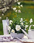 Table decoration of white Viola cornuta and white aquilegia