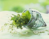 Flowering strawberry plant in small glass hanging flowerpot