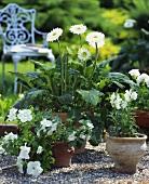 Bepflanzte Tontöpfe mit Gerbera, Petunien und Löwenmaul