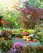 Autumn in garden with pumpkins and chrysanthemums