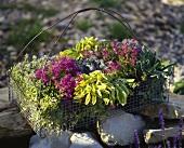 Wire basket of various herbs