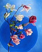 Blue glass plate with sprigs of magnolia