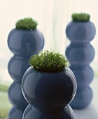 Blue spherical pot with moss