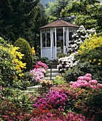 Luxuriant, old-English style garden with rhododendrons and azaleas on steps leading to a summer house