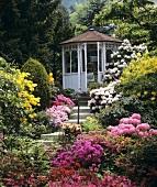 Üppiger Garten mit Rhododendren und Azaleen an Stufen zu einem Pavillon im altenglischen Stil