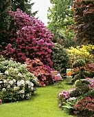 Garden chairs among flowering rhododendrons and azaleas