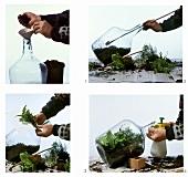 Steps: Selbermachen von Flaschengärten