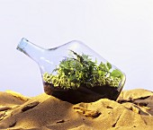 Bottle garden with various house-plants