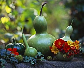 Bottle gourds (Calabash), one with a wreath of flowers
