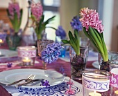 Springtime table with hyacinths in glasses