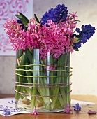 Fragrant hyacinths in a glass vase