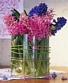 Fragrant hyacinths in a glass vase