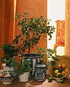 Orange tree with fruit in decorative pot