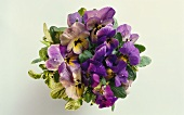 Overhead view of a posy of pansies
