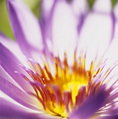Detail of an aster