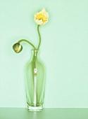 Iceland poppies (Papaver nudicaule) in green glass vase