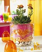 Echeveria in decorated glass container